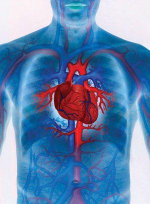 + Best szív, vérnyomás ideas in | vérnyomás, egészség, gyógynövények