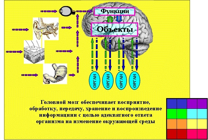 mi vezet az agy hipertóniájához