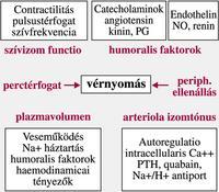 hipertónia alacsony reninszinttel