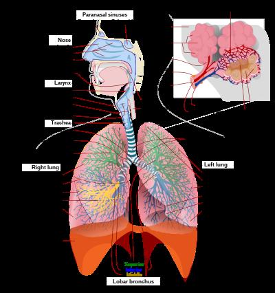 magas vérnyomás a VSD hátterében pszichológiai jellemzők magas vérnyomásban
