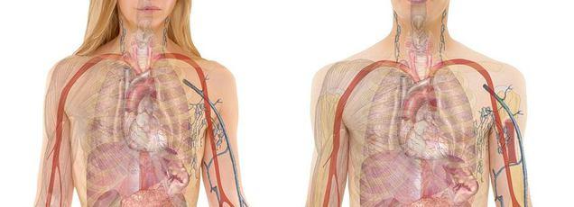 pulmonalis vénás hipertónia magas vérnyomás kezelése loristával