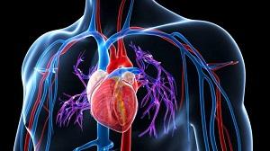 a vese magas vérnyomásának kezelése népi