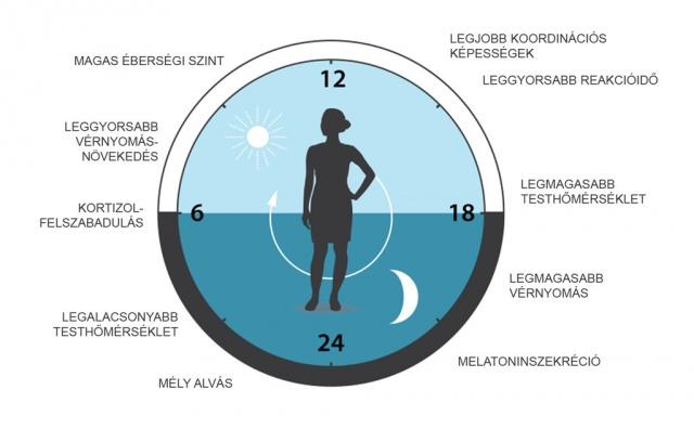 A 24 órás vérnyomás-szabályozás cirkadián mechanizmusainak klinikai jelentősége