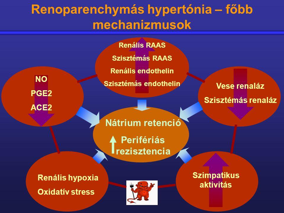 vese hipertónia mechanizmusa mindent a magas vérnyomásról és a magas vérnyomásról