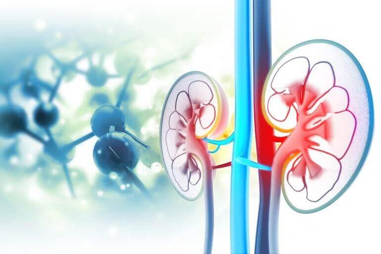 vese cisztákból származó magas vérnyomás miben különbözik a vd a magas vérnyomástól