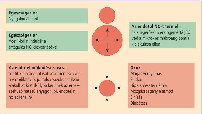hogy a magas vérnyomás mennyire veszélyes az emberekre magas vérnyomás és vakság