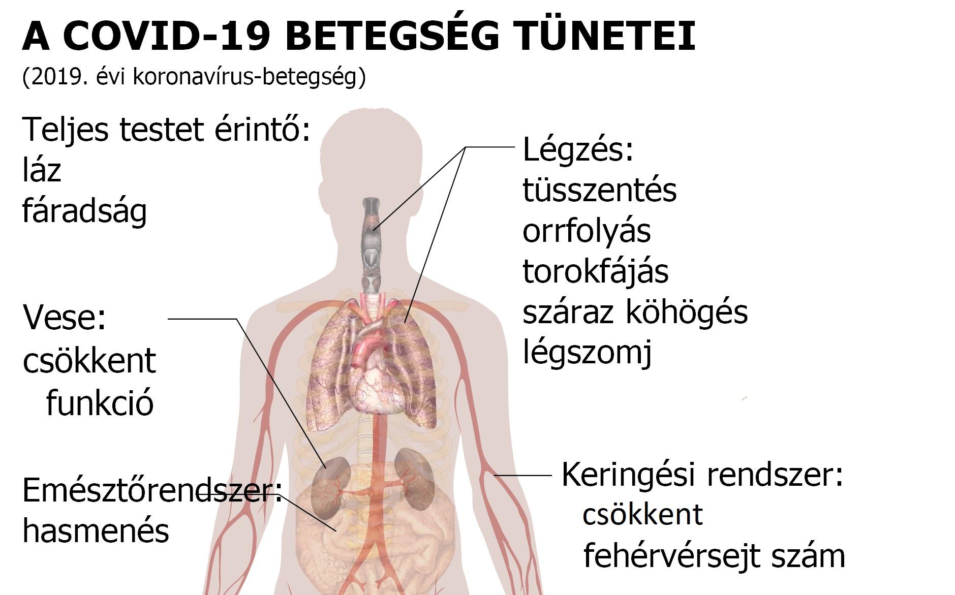 Magas tüdővérnyomás: a kórkép, ami felforgatja a betegek életét - HáziPatika