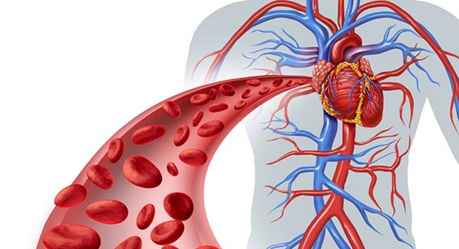 Szív- és érrendszeri betegségek kialakulása, lehetséges szövődményei és a megelőzés lehetőségei